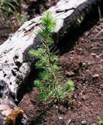 Giving trees for achange
